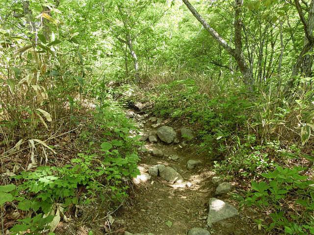 飯縄山 山道